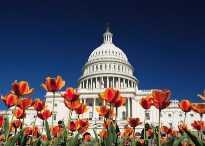 US Capitol, Washington D.C
