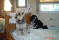 Maxwell and Bailey in RV