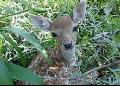 Mesopotamia Lodge Deer Park - MyDriveHoliday